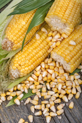 Freshly picked domestic corn on an old rustic table