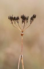 Ladybug on a plant straw