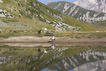 Cavalli al laghetto Pietranzoni