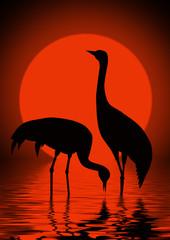 Cranes and sun