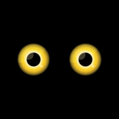 Yellow Cat eyes in dark night.