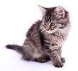 Beautiful kitten isolated on white