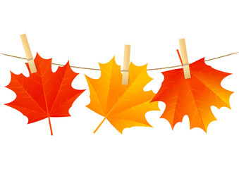 Autumn maple leaves for Your design