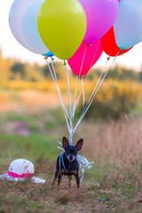 Собачка парашютист