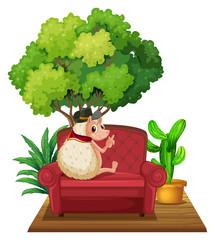 Hedgehog on Sofa