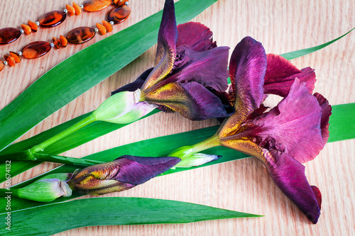 Foto op Canvas Iris Still life: Blossoming irises and costume jewelry against a tabl
