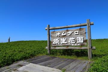 紋別オムサロ原生花園