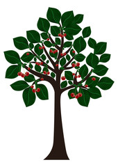 Tree with green leaves and cherries