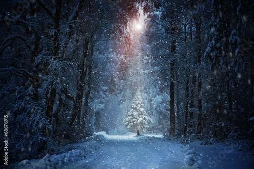 Foto op Canvas Bossen Weihnachtsbaum