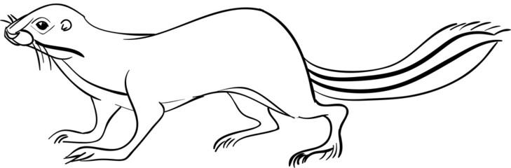 Тонкопалый суслик