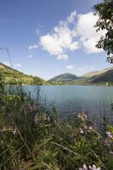 Fioritura al lago di Scanno