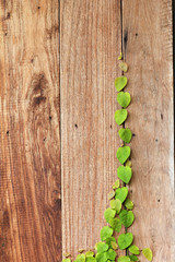 green leaf on wood wall