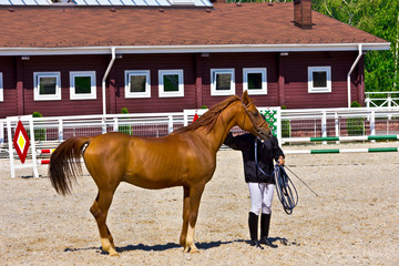 Chestnut thoroughbred horse with trainer in a paddock.