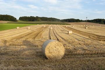 Kornfeld Feld in der Nähe von München, Deutschland