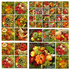 fall fruits pattern