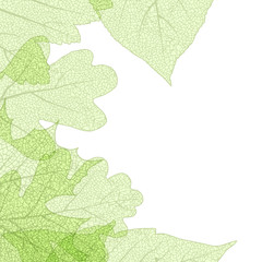 Leaf skeletons autumn tenplate. EPS 10