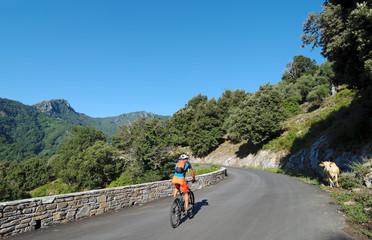 cycliste et vache en montagne Corse
