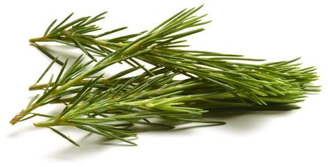 Pinus Fyrreslægten Pine Beintbaam Sosna Sosna Pino Pin