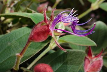 Blüten-alien