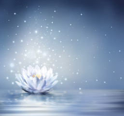 waterlily light blue on water - fairytale background