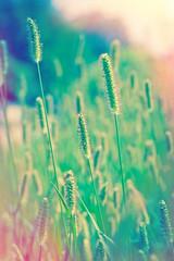 Beautiful field of grass