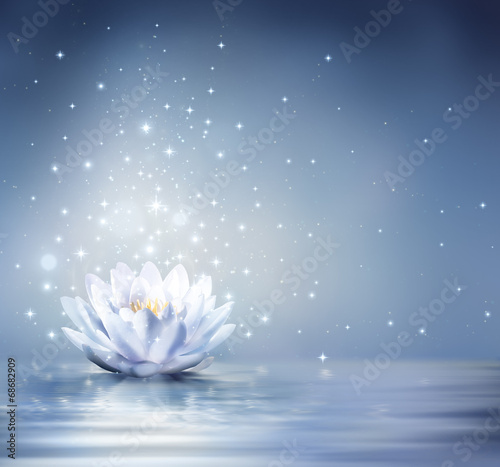 Fotobehang Lotusbloem waterlily light blue on water - fairytale background