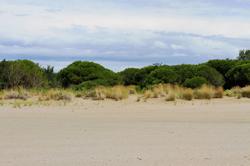 vegetation with low shrubs and sand 1