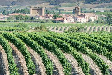Viñedos con Sajazarra al fondo, La Rioja (Españ)