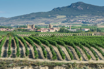 Vineyard, Sajazarra as background, La Rioja