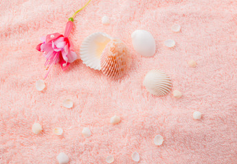 spa soft concept with delicate pink flower fuchsia, seashells on