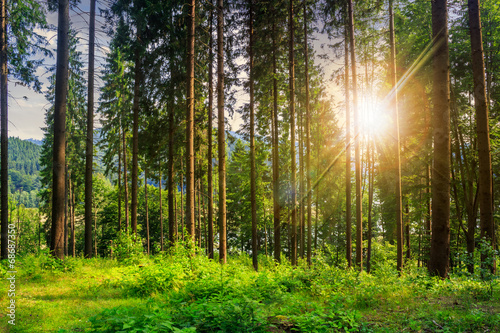 canvas print picture forest glade in  shade of the trees at sunset