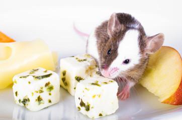 Maus auf einem Käseteller