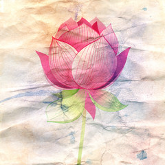 lotus flower on a crumpled paper
