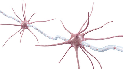 Neurons, Nervenzellen, Myelinscheide - 3D Illustration