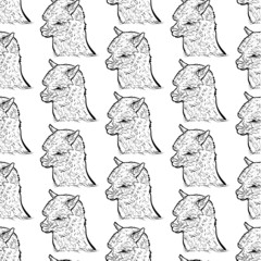 Seamless pattern of alpaca