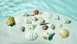 Seashells under water.