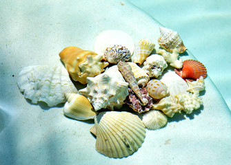 Seashells under water.