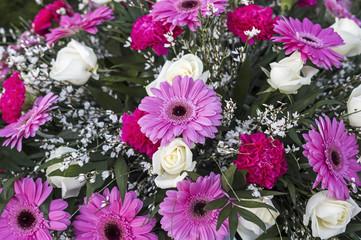 Rose und weiße Blumen