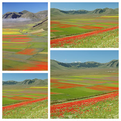images of fantastic colorful flowering  fields on Piano Grande