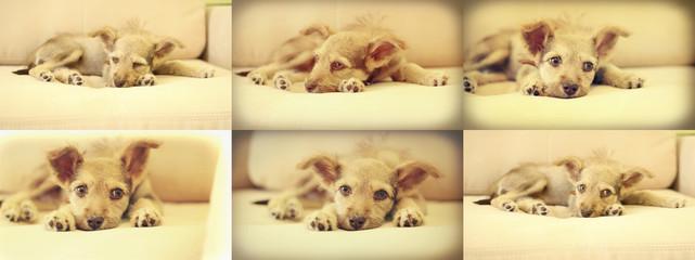 puppy lying