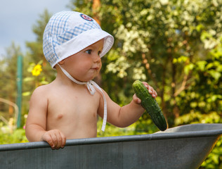 Smart toddler with cucumber in garden barrow