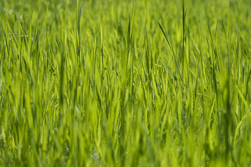 green grass abstract nature background