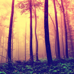 Frightening forest trees background