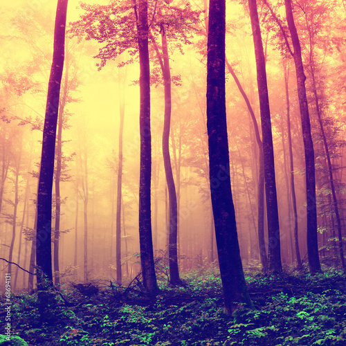 Frightening forest trees background - 68694131
