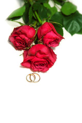 golden wedding rings and red roses