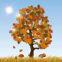Autumn oak vector background