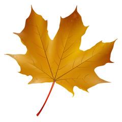 Ahornblatt - Herbst
