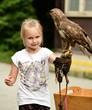 faucon et fauconnier