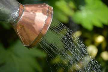 Watering Can Stream