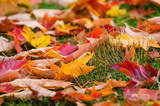 Fototapety Colorful autumn leaves nature background